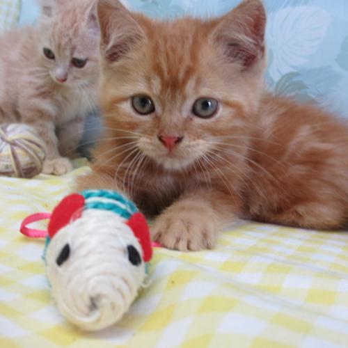 かわいい子猫がお待ちしています。